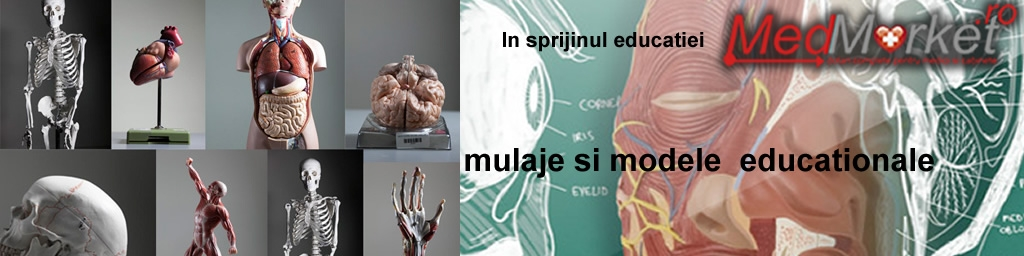 Mulaje, Modele Educationale