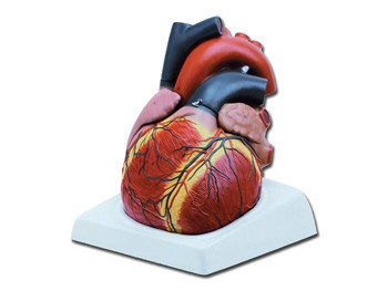 Mulaj inima- 3X