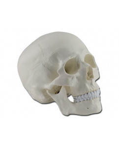Mulaj craniu uman – 3 parti