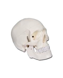 Mulaj craniu uman – 2 parti