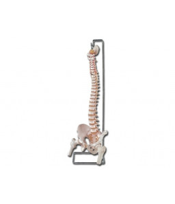 Mulaj coloana vertebrala flexibila cu cap femural si sacrum