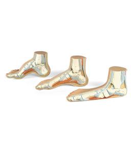 Mulaj picior normal / plat / cav