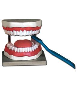 Mulaj igiena orala