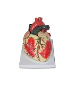 Mulaj inima- 3X-3 parti